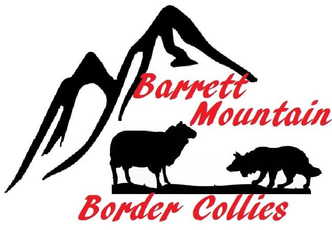 Barrett Mountain Border Collies